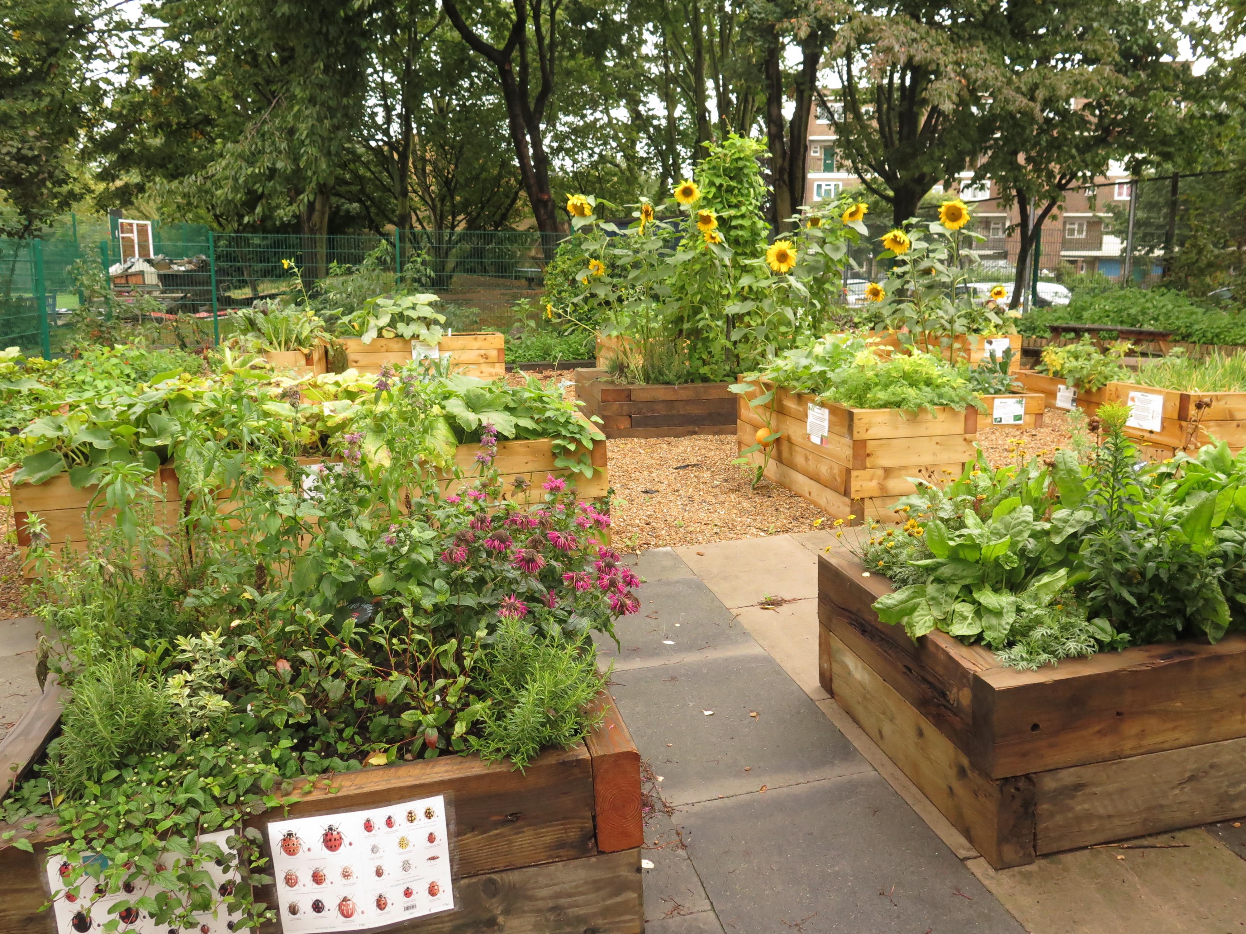 Ideas For School Gardens School Garden Ideas Youtube Decoration ...